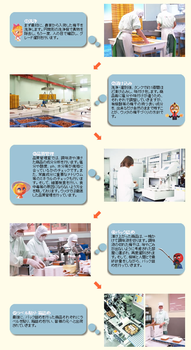 紀州産南高梅は果肉が柔らかく、果皮のきめが細かいため、オートメーション化には適さず、すべて手作業でパック詰めされます。